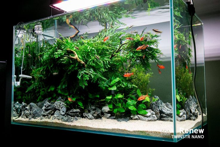 Fresh low maintenance aquarium fish aquariums for Low maintenance fish tank