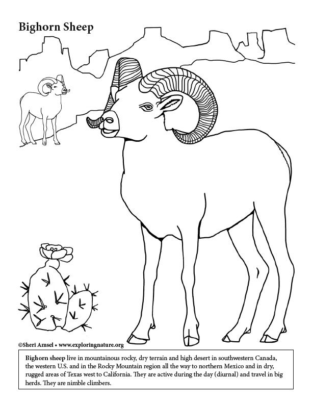 Learn About And Color Animals On Exploringnature Org Coloring