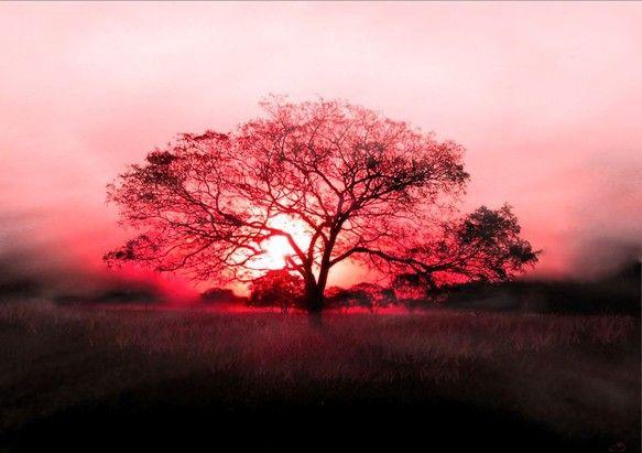 草原に立つ1本の木のバックから昇る朝陽を、幻想的に表現してみました。 *インクジェット印刷額縁サイズ:460㎜×335㎜(カラー:ダークブラウン)...|ハンドメイド、手作り、手仕事品の通販・販売・購入ならCreema。