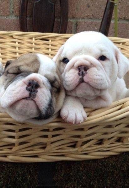 Sweet little puppies!