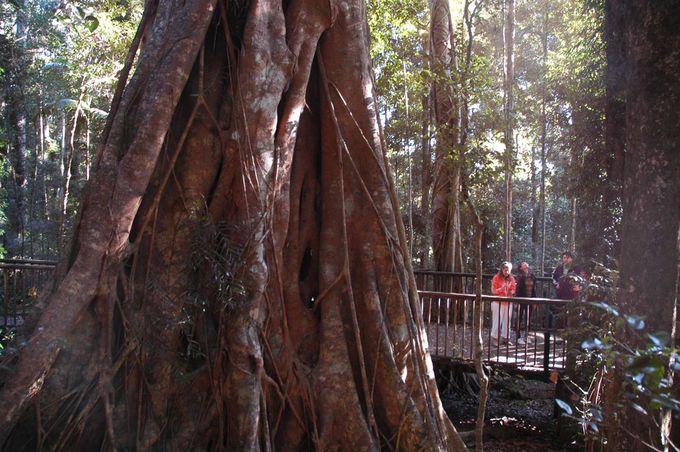 12 Great Brisbane Walks | Must do Brisbane