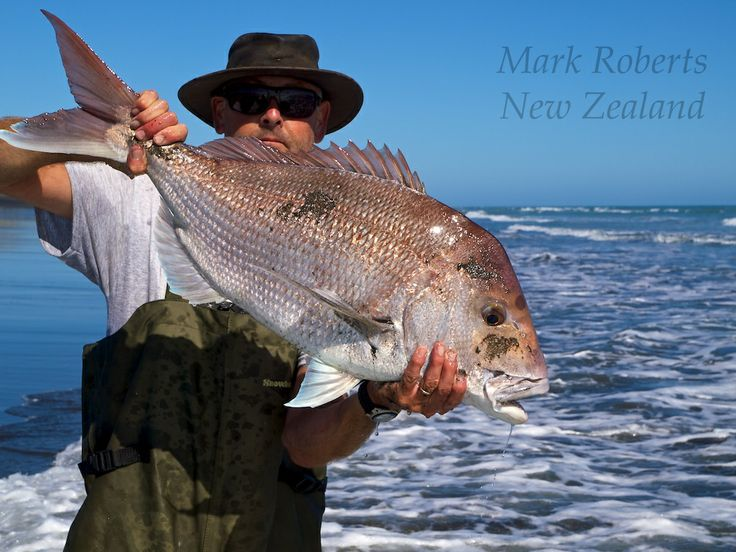 New Zealand Snapper of about 7 kg. We didn't weigh it because it was released straight after this shot was taken. The precise location is on the beach about 10 kilometres south of Patea.