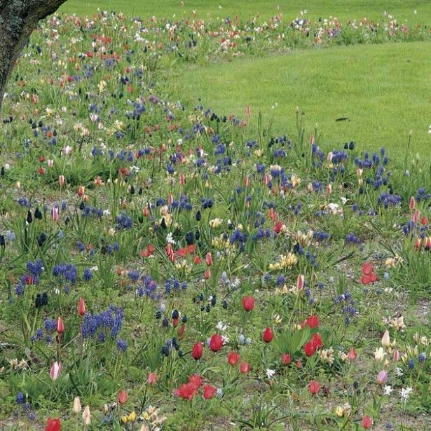 Esprit Jardin En Liberté 150 bulbes