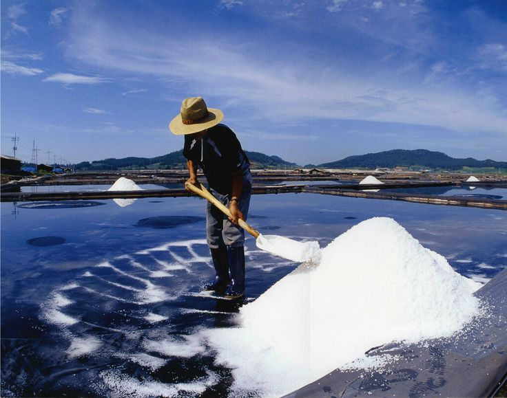 천일염에 관한 신화: 소금은 소금일 뿐이다
