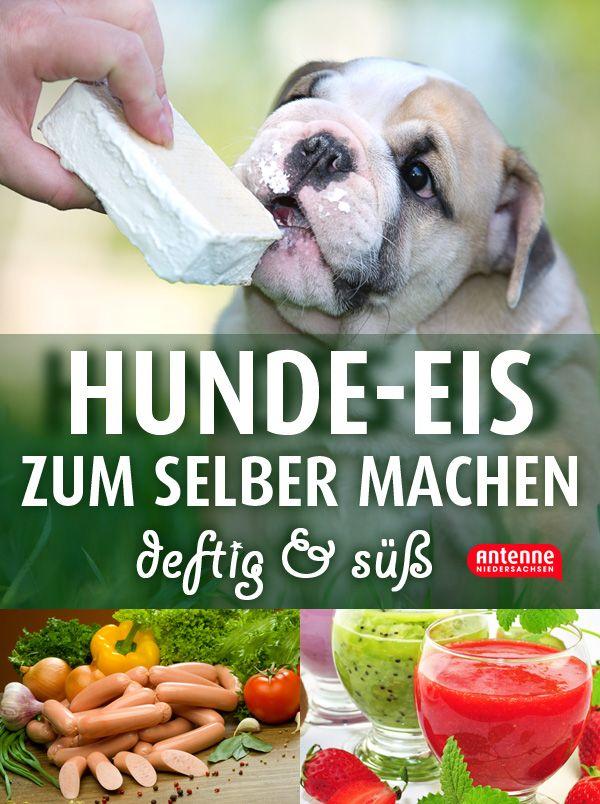 Hunde-Eis - einfach selber machen. Selbst gemachtes Eis aus Früchten, Wurst,Joghurt, Quark, Hüttenkäse, Fleischbrühe, Gemüse, Leberwurst, Brokkoli und mehr. Selbstgemachte Erfrischung für eure Haustiere.