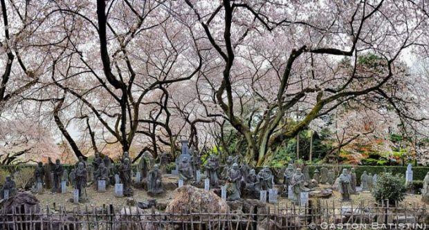 În fiecare an, venirea primăverii este aşteptată cu sufletul la gură de milioane de oameni din Japonia şi asta pentru că ţara se transformă în totalitate.Cireşii, plantaţi în parcuri, pe marginea drumurilor,... | Galerie 0