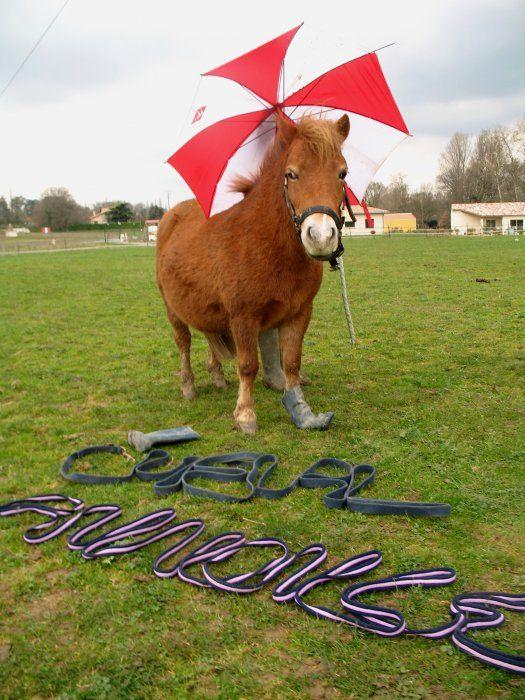 Maintenant, tu sais ou je veux aller ! #poney #chevalannonce #concours #cheval