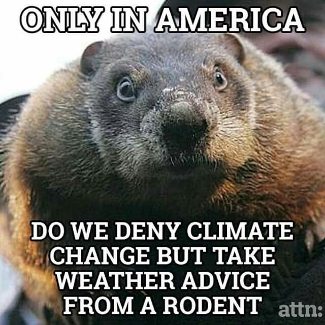 Image result for advice for ground hogs day