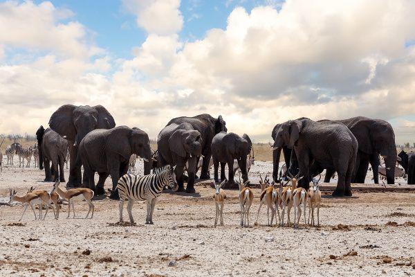 Národný park Etosha, Namíbia