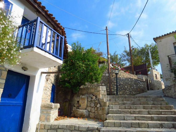 Fallen orange fruits in Afitos, a traditional village in Kassandra