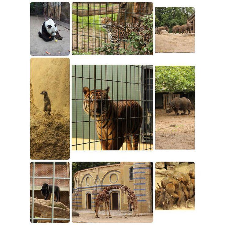 "The Berlin Zoological Garden- Germany 2011 🐆 ""Zoologischer Garten Berlin opened in 1884"" #berlin #zoologischergarten #germany #tyskland #tb🔙 #trip✈️ #europetrip #interrail #interrail2011🚂🌍 #vacation #natu"