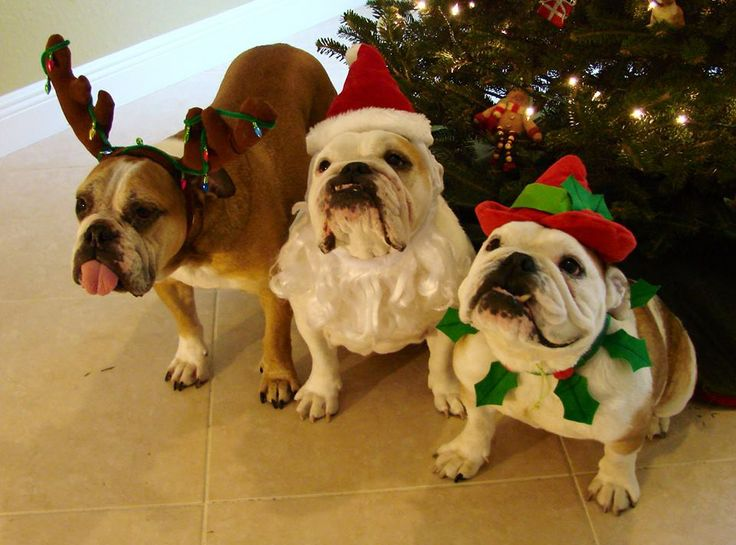 ❤ 3 VERY helpful Elves -- Booger, Monster, & Bruiser ❤  Posted on Buddies Thru Bullies, Inc.
