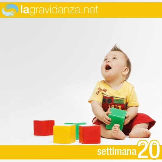 http://www.lagravidanza.net/settimane/20-settimana-di-gravidanza