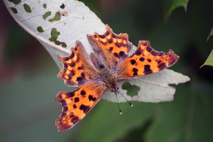Butterfly - There are other beautiful flying creatures in the raptor park.