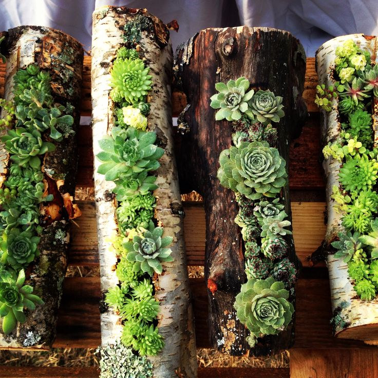 Birch and Madrone logs with hens & chicks. www.coloringnature.com