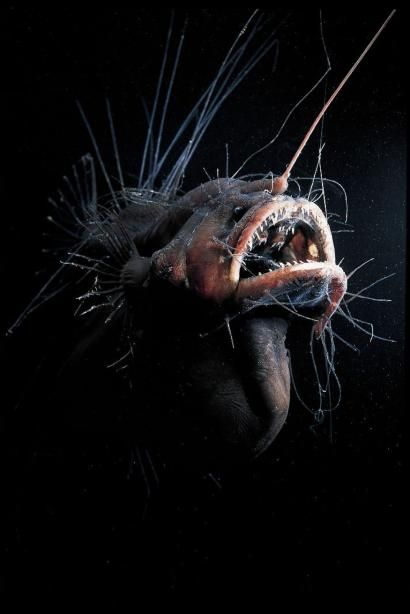 Vente caritative au profit de l'association BLOOM, oeuvrant pour la préservation des océans et de la biodiversité. Photographies de créatures des abysses. Avec le soutien d'Issey Miyake Men. - vente aux enchères