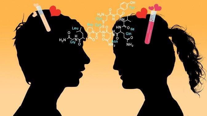 Bewertungen: 29   Kommentare: 0 Liebe und Triebe Liebe ist Biochemie – und was noch?  Verliebtsein entfacht im Gehirn ein chemisches Feuerwerk. Und auch wenn sich später der Sturm der Gefühle legt, spielen Hormone eine wichtige Rolle. Ist damit schon alles über eines der großen Mysterien in unserem Leben gesagt?