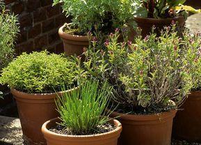 Les erreurs à éviter dans l. a. tradition des plantes aromatiques – M6