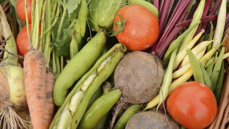 Composting At Home Is Easier Than You Think