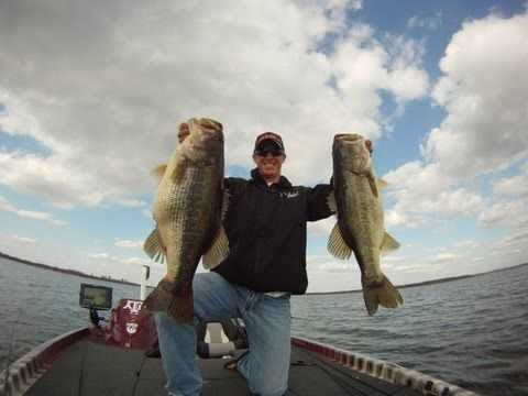 57 best images about fish on pinterest the boat lakes for Blue bass fish