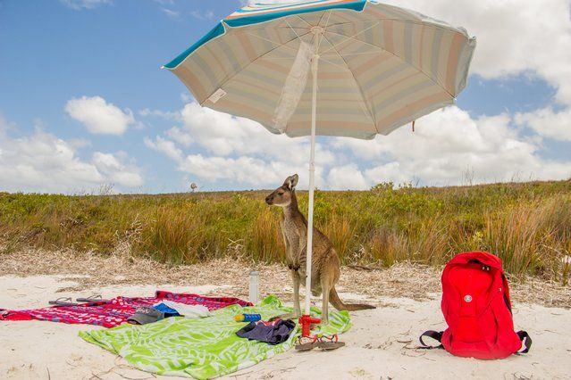 Comedy Wildlife Photo Awards 2016 - A regular beach day