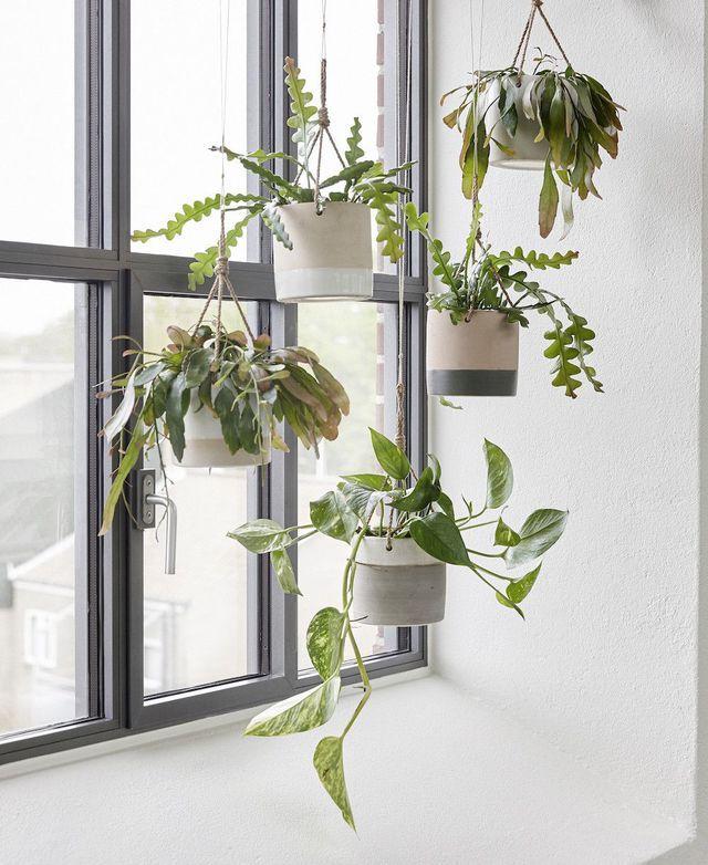 Faites régner l'inspiration nature chez vous avec ces pots de fleurs suspendus comme un rideau végétal.