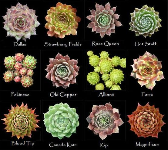 Assorted types of succulents #7
