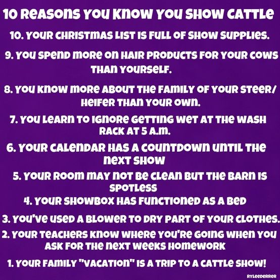 Couldn't be any more true about me! Show cattle is my life and wouldn't trade for anything ever!