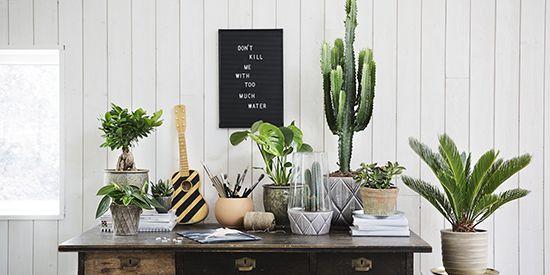 Alt for livet med planter – blomster, inspirasjon og hage - Plantasjen.no