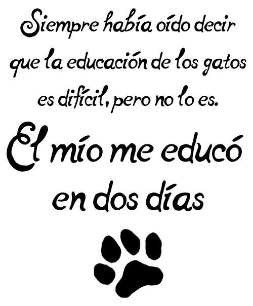 muy cierto!!!!!!!quiero mis gatos son especiales!!!