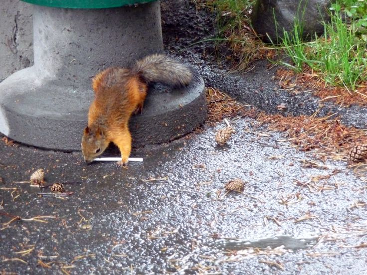 Portfolio Multimedeia 2: Orava soittaa huilua