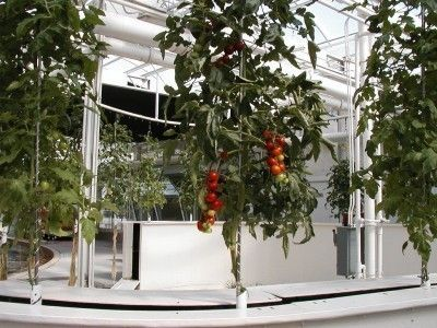 Aeroponic Gardening - How To Create An Aeroponic System For Plants