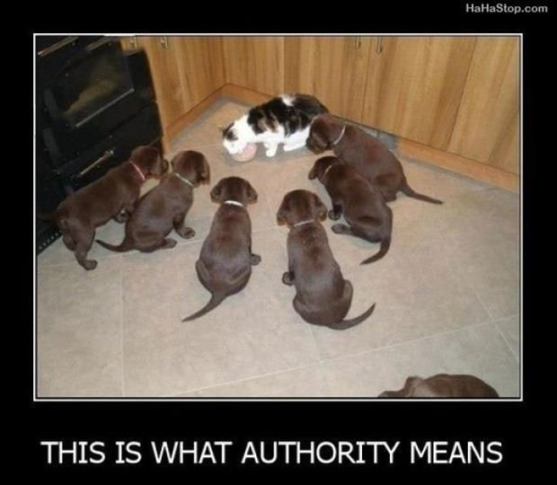 This is definitely how things role in our house! the cats have firmly established their seniority! LOL