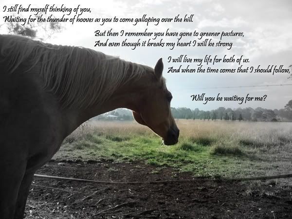 Cute Horse Quotes: The 25+ Best Horse Poems Ideas On Pinterest