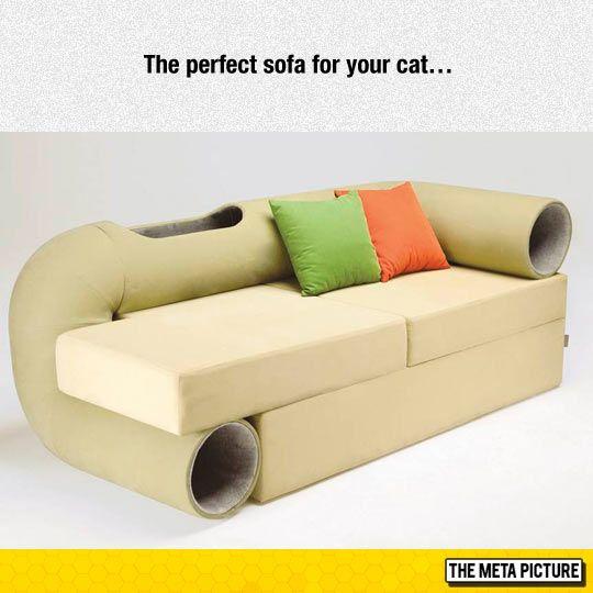 My Cat Needs This