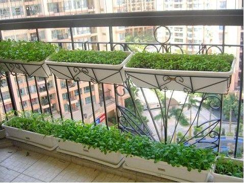 urban   Balcony PlantersBalcony GardeningUrban. 52 best Balcony Gardening Ideas images on Pinterest