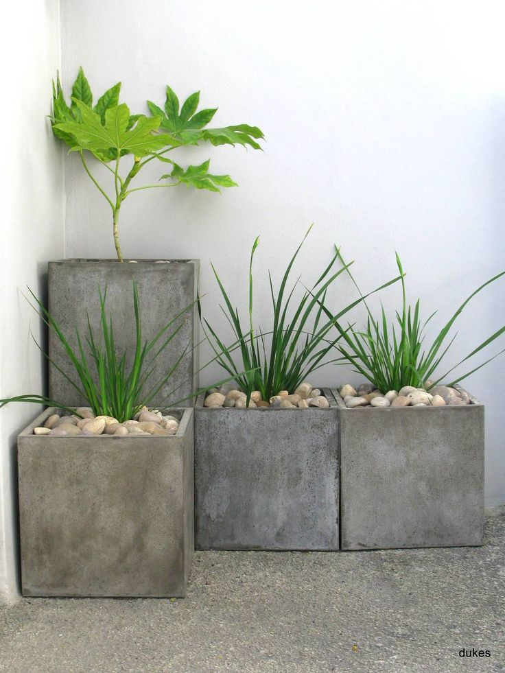 Libertia grandiflora and Fatsia //   Green Home