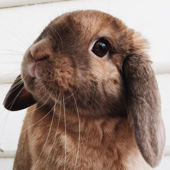 "Bunny Rabbit: ""I wonder why they named me Chocolate?!"""