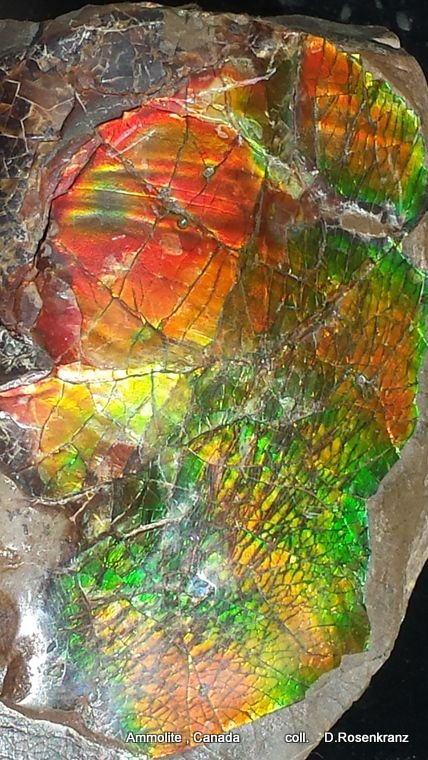 Ammolite. A rare opal-type gemstone found in US & Can. As w/amber & pearl, it is a biogenic gemstone/ given gemstone status in 1981/ more expensive than diamonds