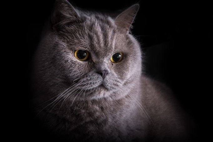 "Photo ""Sir Futrzak"" by Lightspot"