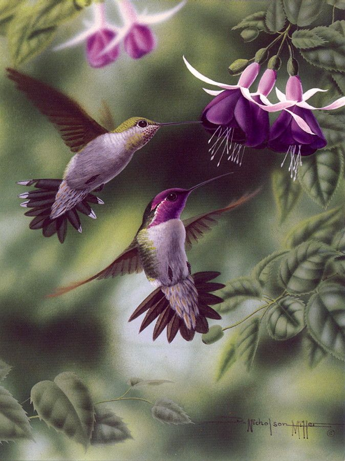 Gorgeous purple hummingbird art! By artist D. Nicholson Miller.