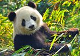 68 Interesting Facts About Pandas