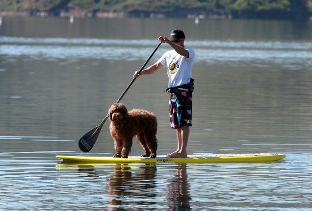 Even in landlocked Utah, stand-up paddle boarding is riding a wave of popularity. (Rick Egan  | The Salt Lake Tribune)