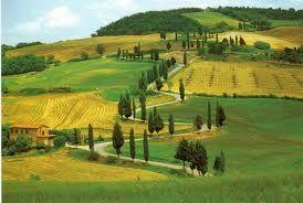 #hills # greenfields # cypresses