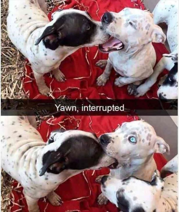 Funny Animal Picture Dump Of The Day 23 Pics #funnydogs