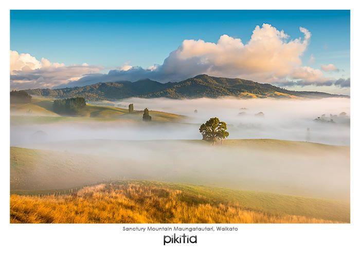 Postcard 'Sanctury Mountain Maungatautari, Waikato' which is found in Pikitia's high quality range of postcards