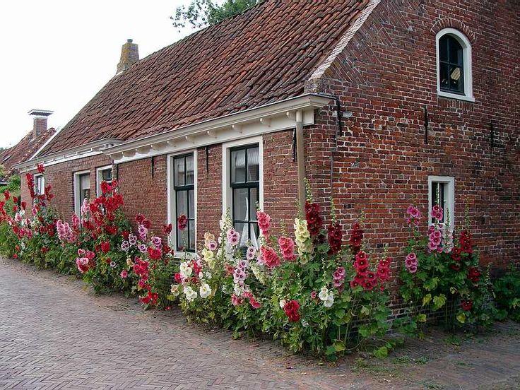 Garnwerd in de zomer, stokrozen bij huisjes in de Torenstraat. Groningen. (Foto: G. Hardeman)