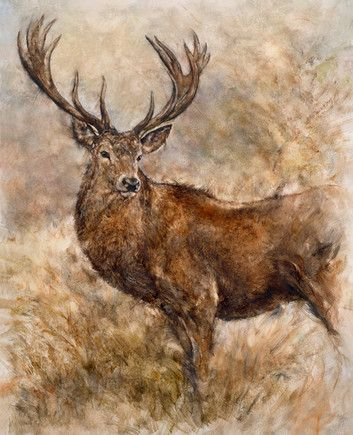 Majestic Stag by Gary Benfield £535
