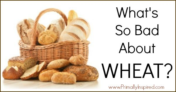 I'm not ready to go off breads altogether but this explains what is wrong with modern wheat, and some practical solutions.