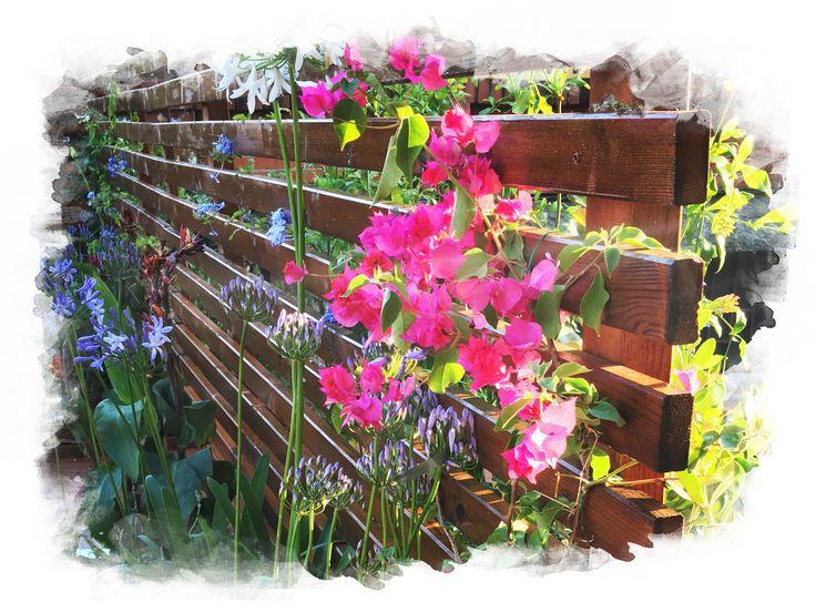 Oltre 25 fantastiche idee su gazebo per giardino su for Sii il tuo architetto